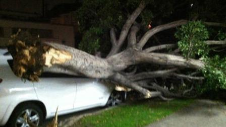 ABC7 viewer Eddie Shamie sent in this photo of a tree on top of a car in Los Angeles, Calif., on Wednesday, Nov. 30, 2011.