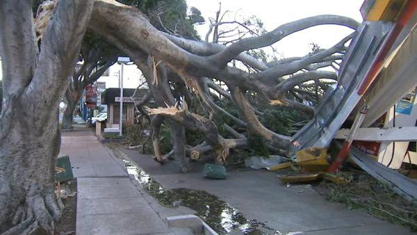 A tree knocked down the canopy at a Shell station in Pasadena on Thursday, Dec. 1, 2011.