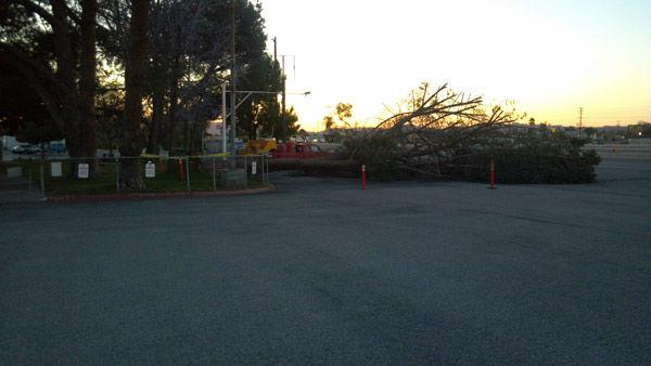 An ABC7 viewer from Pacoima sent in this photo of strong winds knocking down a tree at Whitman Airport.