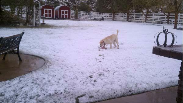 ABC7 viewer Miriam Cordova of Acton sent in this photo of her dog 'Boomer' playing in the snow after a storm passed over Southern California on Wednesday, Feb. 15, 2012.