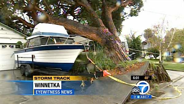 A larger tree in Winnetka was uprooted as a powerful storm passed over Southern California on Sunday March, 25, 2012.
