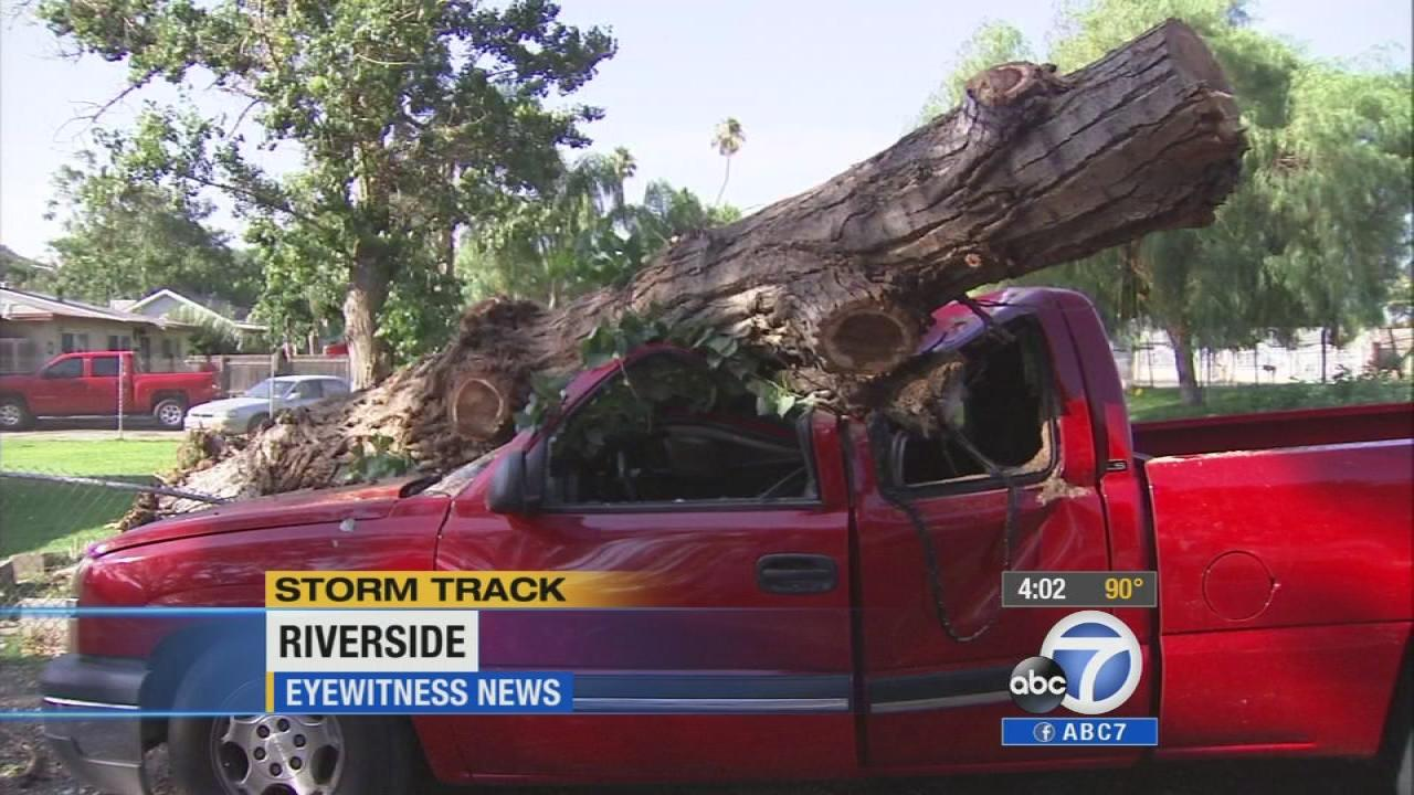 A tree is seen on top of a truck on Friday, Aug. 30, 2013, after a summer storm swept through Riverside.