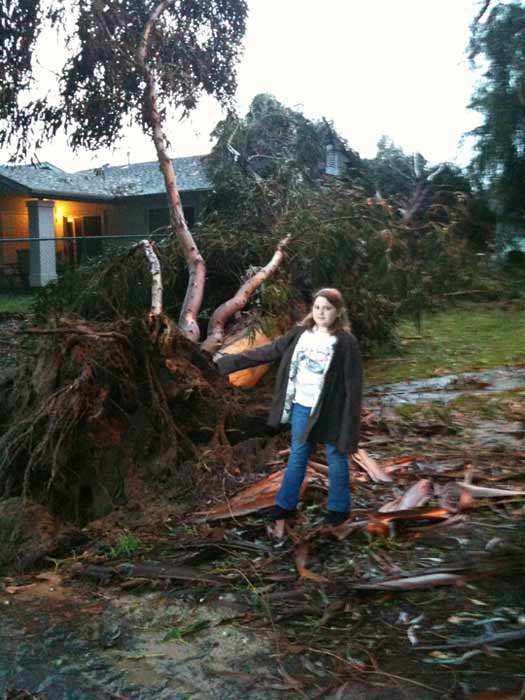 ABC7 viewer Amy Smith sent in this photo of a fallen tree in Camp Pendleton, Calif. on Wednesday, Dec. 22, 2010. When You Witness breaking news, or even something extraordinary, send pictures and video to video@myabc7.com, or send them to @abc7 on Twitter <span class=meta>(ABC7 viewer Amy Smith)</span>