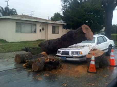 ABC7 viewer Anthony sent in this photo of a fallen tree in northern Long Beach, Calif., on Tuesday, Dec. 21, 2010. When You Witness breaking news, or even something extraordinary, send pictures and video to video@myabc7.com, or send them to @abc7 on Twitter <span class=meta>(ABC7 viewer Anthony)</span>