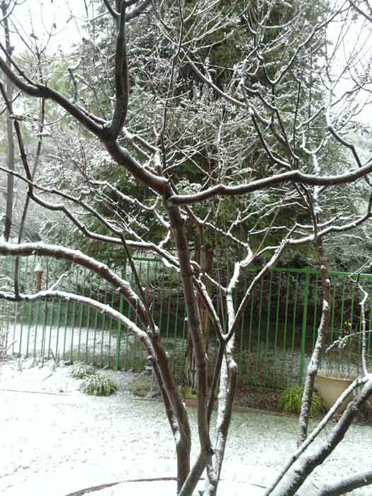 "<div class=""meta ""><span class=""caption-text "">ABC7 viewer Karen Curtis sent in this photo of snow in a neighborhood in Castaic on Sunday Jan. 2, 2011.  When You Witness breaking news, or even something extraordinary, send pictures and video to video@myabc7.com, or send them to @abc7 on Twitter (ABC7 viewer Karen Curtis)</span></div>"