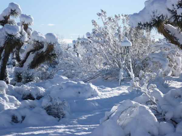 "<div class=""meta image-caption""><div class=""origin-logo origin-image ""><span></span></div><span class=""caption-text"">ABC7 viewer Donald Poage sent in this photo of snow in Pinon Hills, Calif. on Sunday Feb. 20, 2011.  When You Witness breaking news, or even something extraordinary, send pictures and video to video@myabc7.com, or send them to @abc7 on Twitter (KABC photo/ Donald Poage)</span></div>"