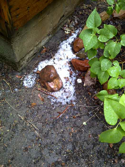 ABC7 viewer Heidi Pure sent in this photo of hail at Sugarloaf, Calif. on Friday Sept. 30, 2011.  When You Witness breaking news, or even something extraordinary, send pictures and video to video@myabc7.com, or send them to @abc7 on Twitter <span class=meta>(KABC photo&#47; Heidi Pure)</span>