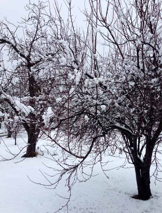 "<div class=""meta image-caption""><div class=""origin-logo origin-image ""><span></span></div><span class=""caption-text"">ABC7 viewer Martha Miller Glubka sent us this photo via Facebook of snow in Yucaipa, Calif. during a storm that hit Southern California on Friday, Feb. 8, 2013.  When You Witness breaking news, or even something extraordinary, send pictures and video to video@abc7.com, or post them to the ABC7 Facebook page or to @abc7 on Twitter  (ABC7 viewer Martha Miller Glubka)</span></div>"