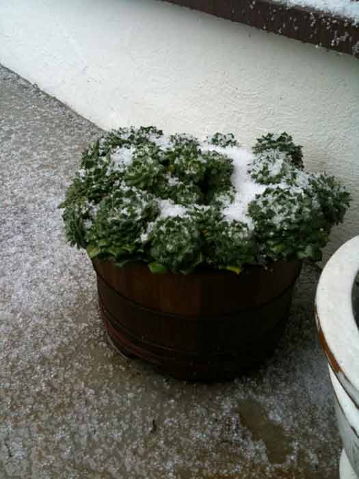 ABC7 executive producer Julie Krallman sent in this photo of hail at Pasadena, Calif. on Saturday Feb. 26, 2011.  When You Witness breaking news, or even something extraordinary, send pictures and video to video@myabc7.com, or send them to @abc7 on Twitter <span class=meta>(KABC photo&#47; Julie Krallman)</span>