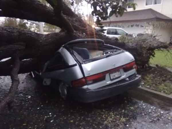 ABC7 viewer Ken Smith sent in this photo of a fallen tree in Huntington Beach, Calif., on Tuesday, Dec. 21, 2010.  When You Witness breaking news, or even something extraordinary, send pictures and video to video@myabc7.com, or send them to @abc7 on Twitter <span class=meta>(ABC7 viewer Ken Smith)</span>