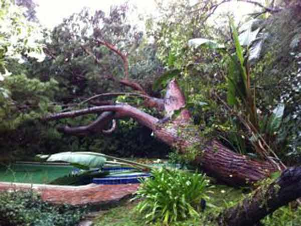 ABC7 viewer Michael Tronick sent in this photo of a fallen tree in Los Angeles, on Monday Dec. 20, 2010.  When You Witness breaking news, or even something extraordinary, send pictures and video to video@myabc7.com, or send them to @abc7 on Twitter <span class=meta>(ABC7 viewer Michael Tronick)</span>