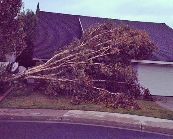 An ABC7 viewer sent in this photo of a fallen tree in La Palma via Facebook on Saturday, March 1, 2014. When You Witness breaking news, or even something extraordinary, send pictures and video to video@abc7.com, or post them to the ABC7 Facebook page or to @abc7 on Twitter  <span class=meta>(ABC7 Viewer)</span>