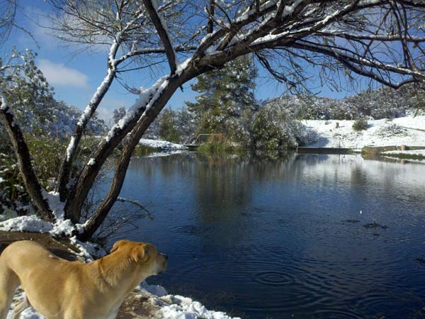 "<div class=""meta image-caption""><div class=""origin-logo origin-image ""><span></span></div><span class=""caption-text"">ABC7 viewer Pam Alps sent in this photo of snow in Cherry Valley, Calif. on Saturday April 9, 2011.  When You Witness breaking news, or even something extraordinary, send pictures and video to video@myabc7.com, or send them to @abc7 on Twitter  (KABC photo/ Pam Alps)</span></div>"