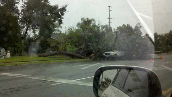 An ABC7 viewer sent in this photo of a fallen tree in San Dimas, Calif. on Wednesday, Dec. 22, 2010. When You Witness breaking news, or even something extraordinary, send pictures and video to video@myabc7.com, or send them to @abc7 on Twitter <span class=meta>(ABC7 viewer)</span>