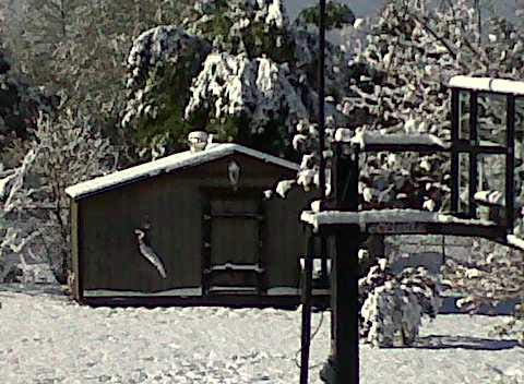 "<div class=""meta image-caption""><div class=""origin-logo origin-image ""><span></span></div><span class=""caption-text"">ABC7 viewer Sheri Zolkiewicz sent in this photo of snow in Yucaipa, Calif. on Saturday April 9, 2011.  When You Witness breaking news, or even something extraordinary, send pictures and video to video@myabc7.com, or send them to @abc7 on Twitter  (KABC photo/ Sheri Zolkiewicz)</span></div>"