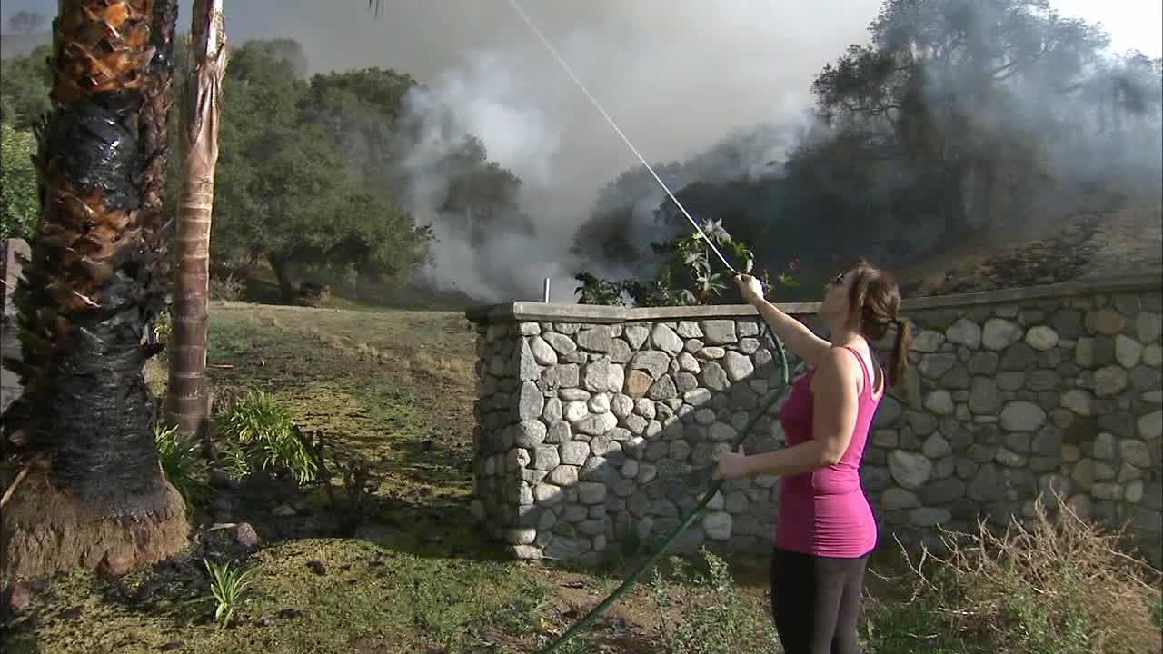 A resident hoses down palm trees and other vegetation in a neighborhood threatened by a fast-moving brush fire that erupted in the foothills above Glendora on Thursday, Jan. 16, 2014.