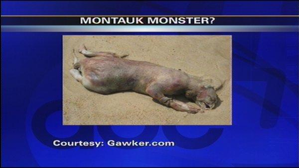 Montauk Monster Mystery