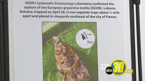 Fight against Grapevine Moth gets million-dollar boost