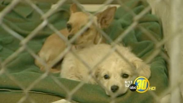 Cold weather not helping animal adoption in Visalia
