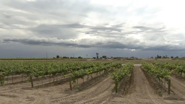 Cool weather stunts the growth of Valley crops