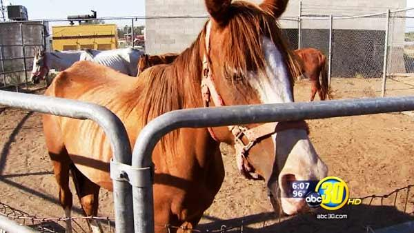 Madera County horse caretaker has a history of animal neglect