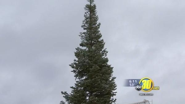 City of Fresno Christmas Tree erected at City Hall
