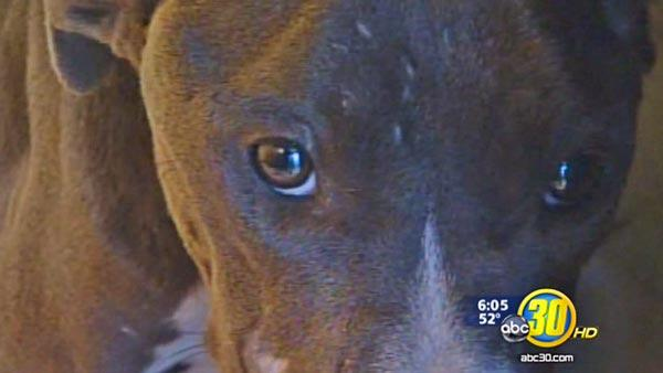Severe animal abuse, neglect case in Parlier