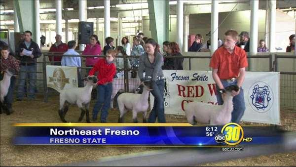 Red Wave Classic Junior Livestock Show at Fresno State