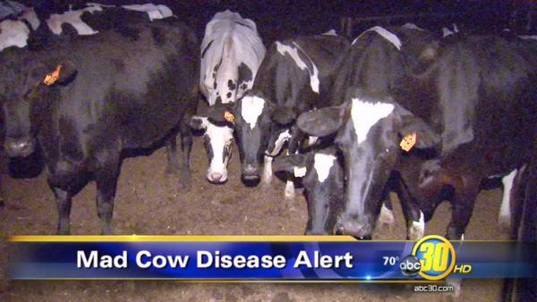 Dairy farmers respond to Hanford Mad Cow disease