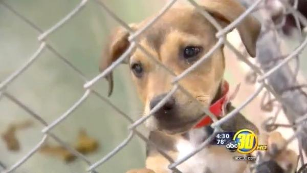 Fresno Co. officials examining animal control options