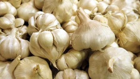 Garlic beats antibiotics at fighting bacteria