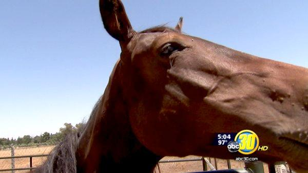 Lawmaker demands answers in horse, mule deaths