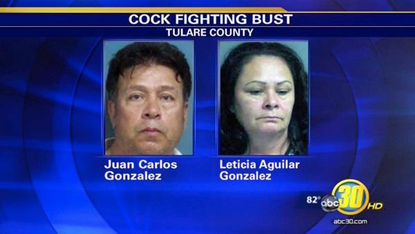Husband & wife arrested in cockfighting bust