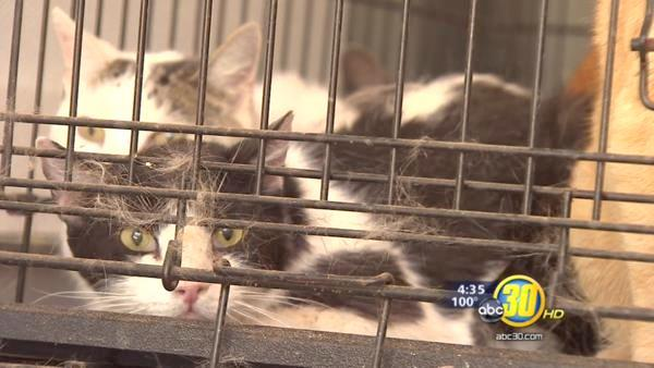 Madera Co animal control transporting dozens of animals