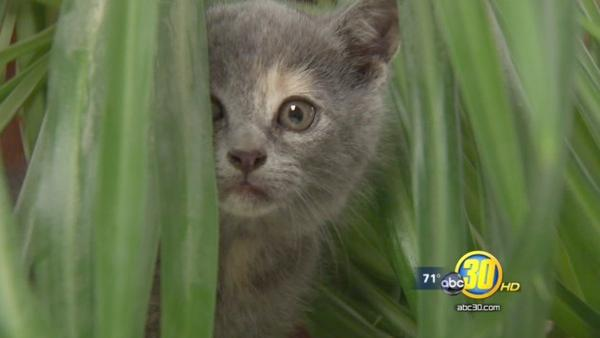 Kittens tossed out of a vehicle on Highway 99