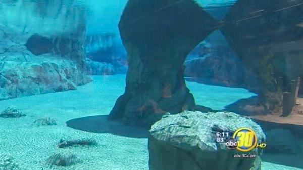 Chaffee Zoo sea lions heading to new home