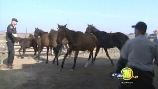 Charges filed in Fresno Co horse cases