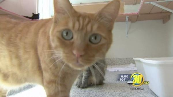Debate over Fresno animal control continues