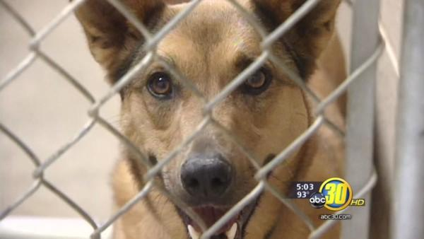 Private contractor taking over Fresno Co animal control