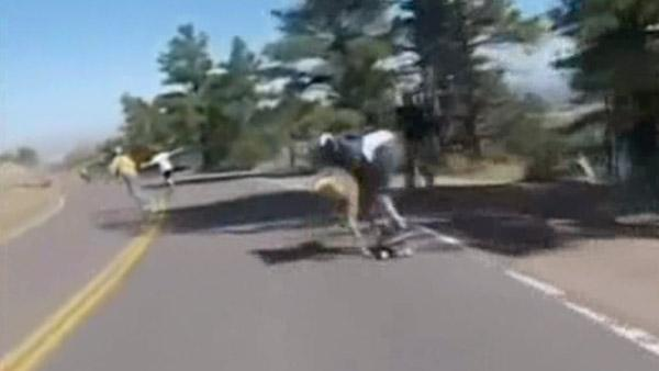 Caught on camera: Skateboarder collides with deer