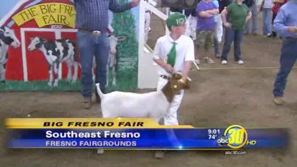 Big Fresno Fair features junior livestock auction