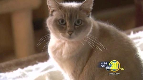 ABC30 donates nearly $8K to Cat House on the Kings