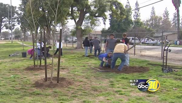 100 new trees are now growing at a Fresno park.
