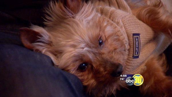 Valley family reunites with stolen dog