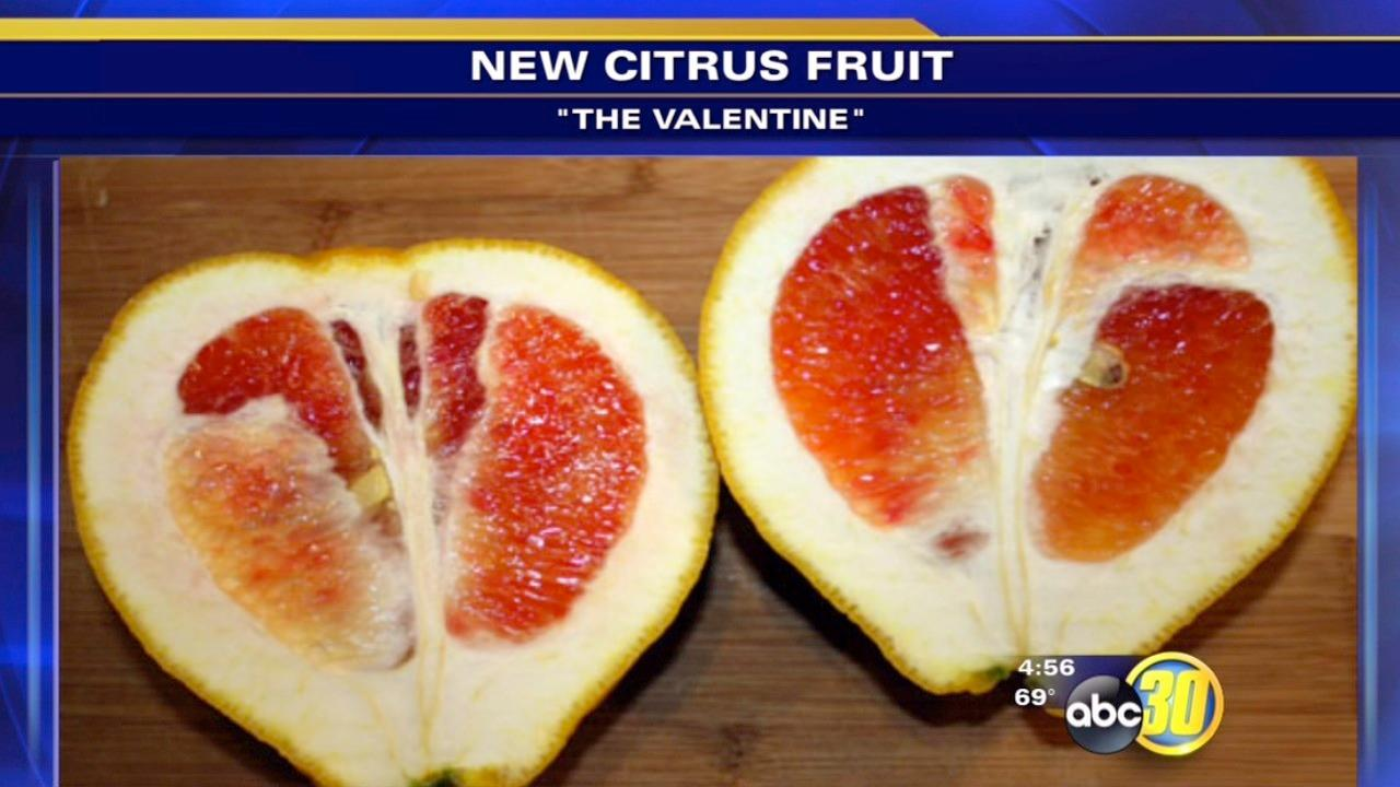 New citrus fruit developed at UC Riverside