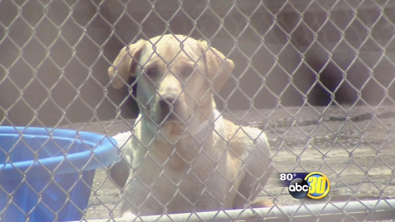 Workers speak about Squaw Valley animal rescue