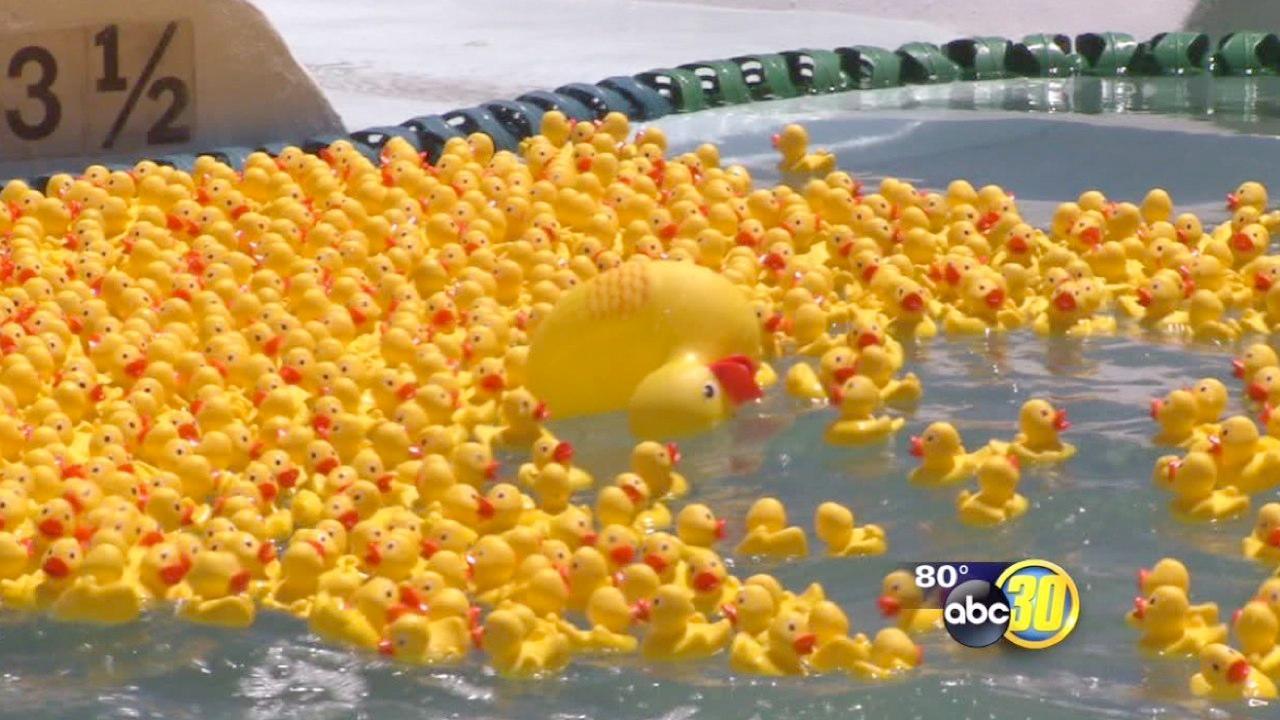 Blackbeard's fundraiser with rubber ducks