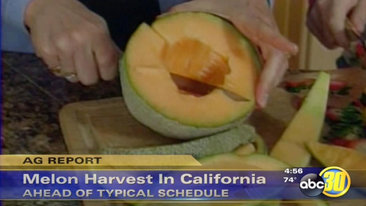 California melon harvest ahead of schedule