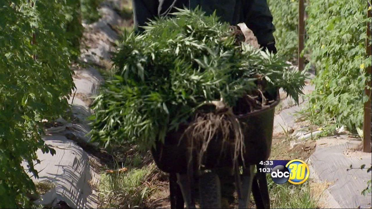 Farmers meet to discuss illegal pot grow issues