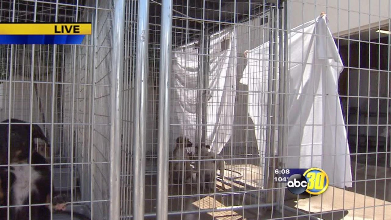 Valley animal shelters try to keep animals cool